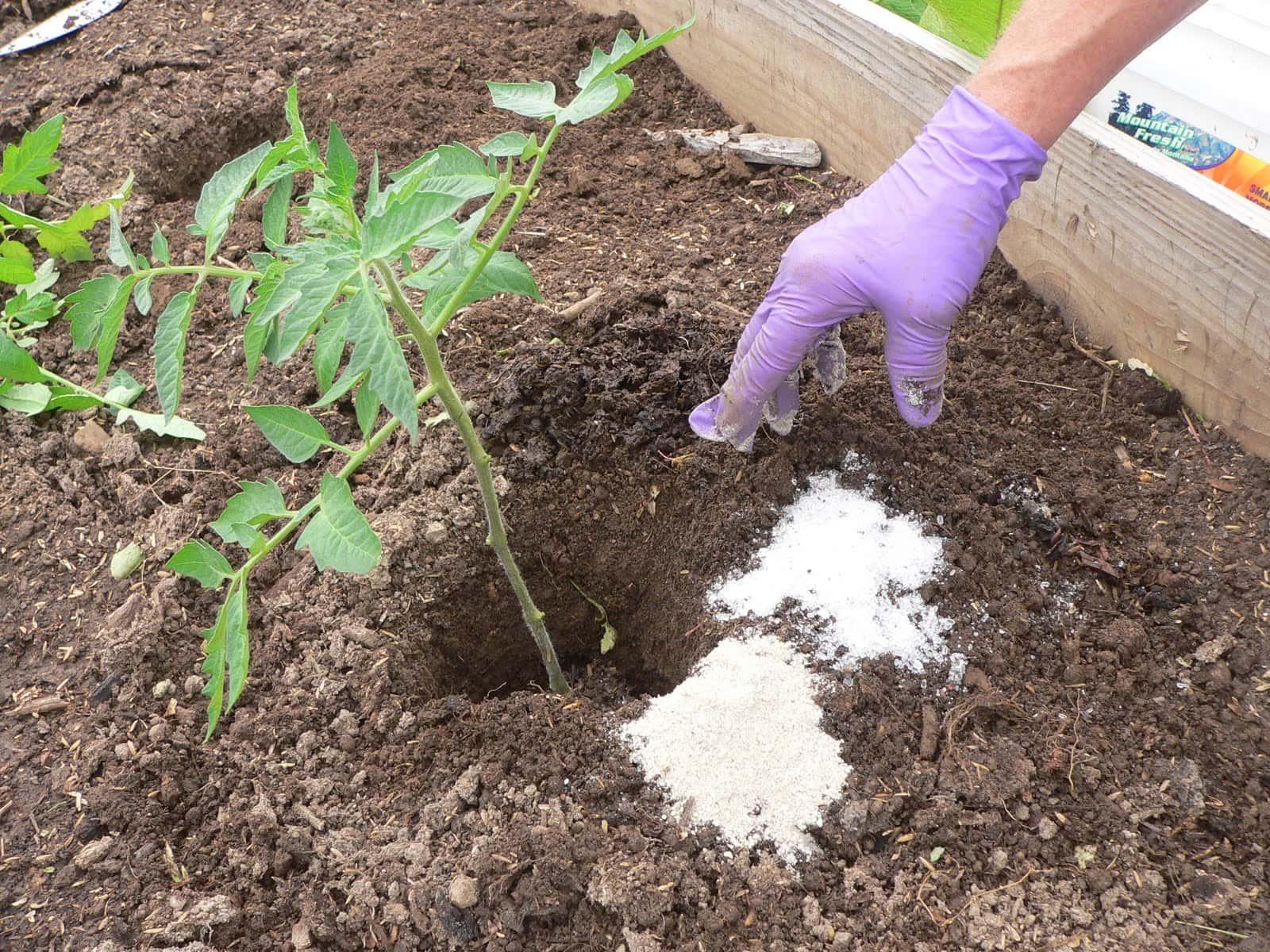 Use epsom salt to keep your plants healthy