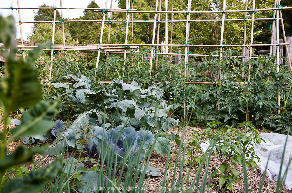 Keep your plant steady with a tomato cage