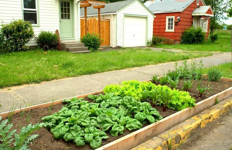 Understand the concept of garden spacing
