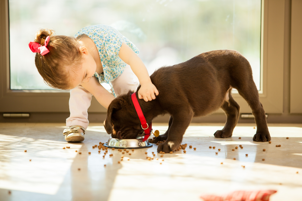 What To Feed And Not To Feed Your New Puppy