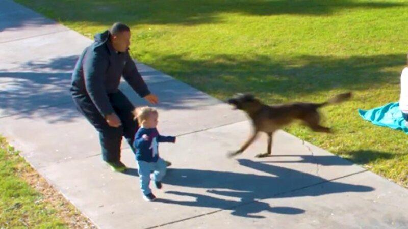 3 Yaşındaki Küçük Çocuk Ona Yaklaşan Yabancı Bir Adam Tarafından Kaçırılmak Üzereyken Cesur Köpek Onu Yabancı Adamdan Kurtardı