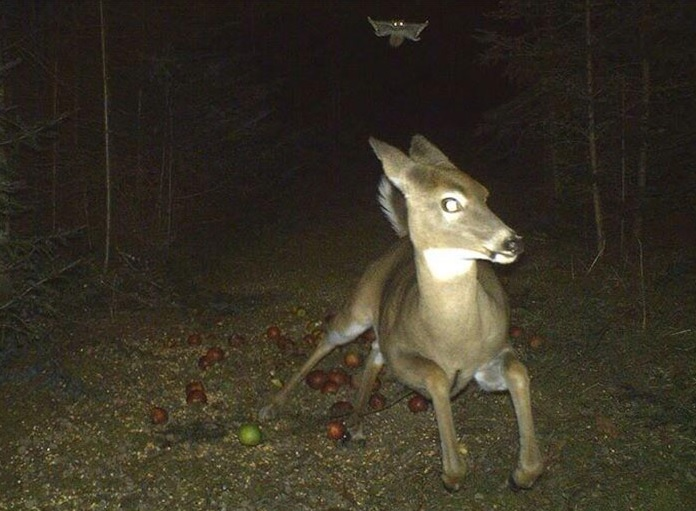 Terrified Of A Flying Squirrel