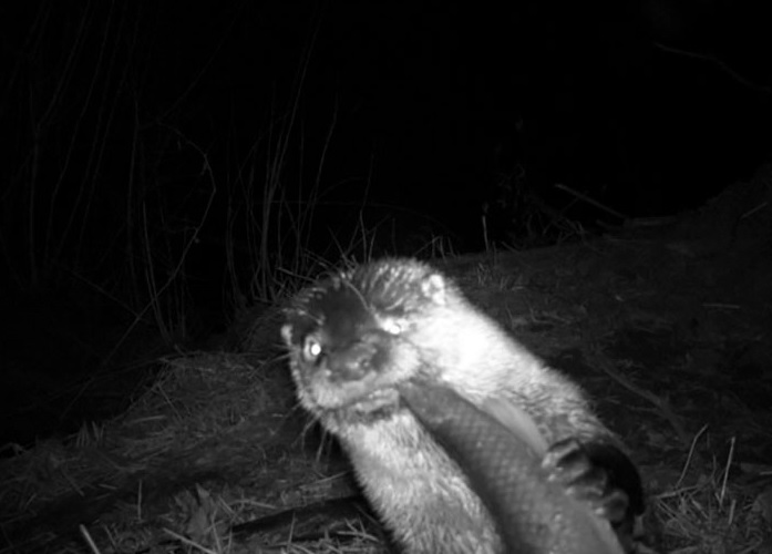 An Otter Having A Snack
