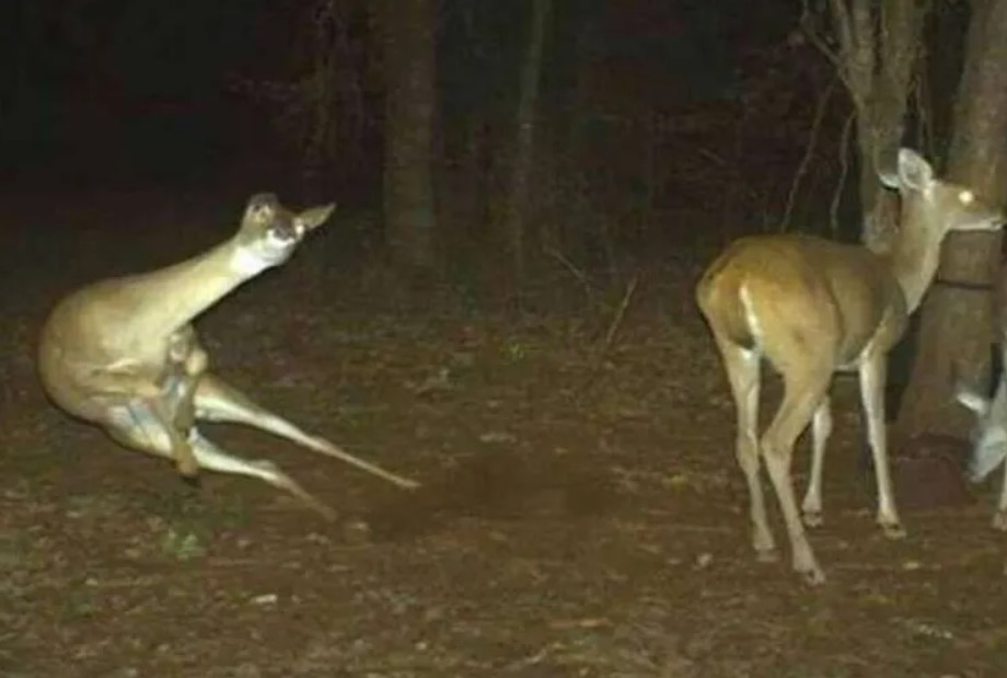 The Intimately Bewildering Moments Captured On Trail Cams