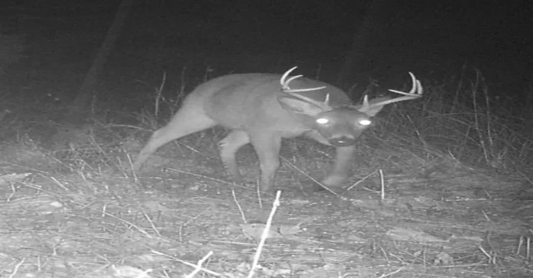 A Man Deer